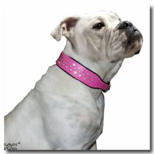 Lederhalsband SUPER mit Strass BIG DOG RED