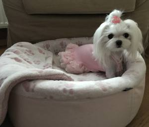 Hundebett,Kuschelnest DREAMLAND ROSE LIMITED EDITION