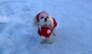 Hundejacke Winterjacke ALASKA RED mit D-Ring