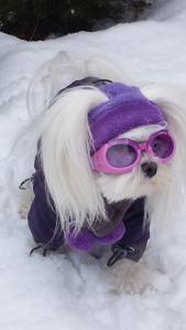 Wintermantel mit Schal *PURPLE PAWS * GIRL ONLY mit D-Ring kurze Beine
