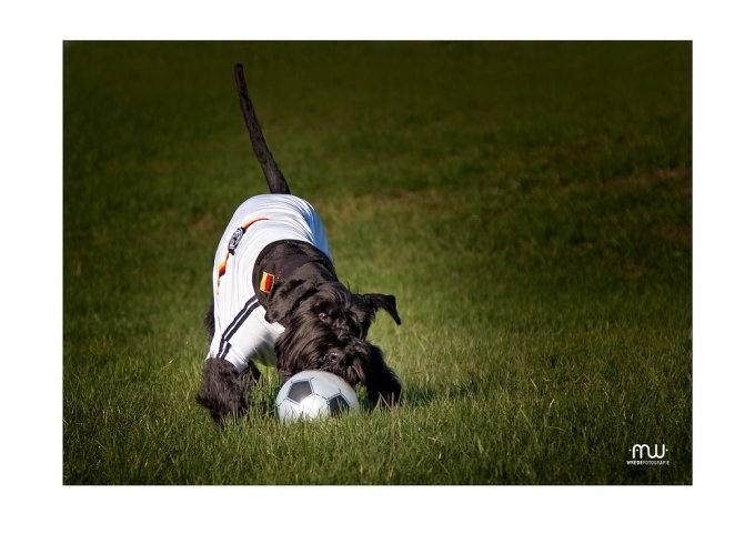 BIG DOG Hunde Trikot -T-Shirt   DEUTSCHLAND