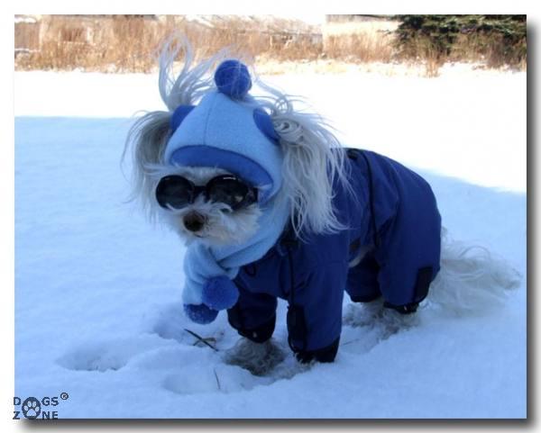 Wintermantel für Hunde MINI PORTHOS mit Kapuze