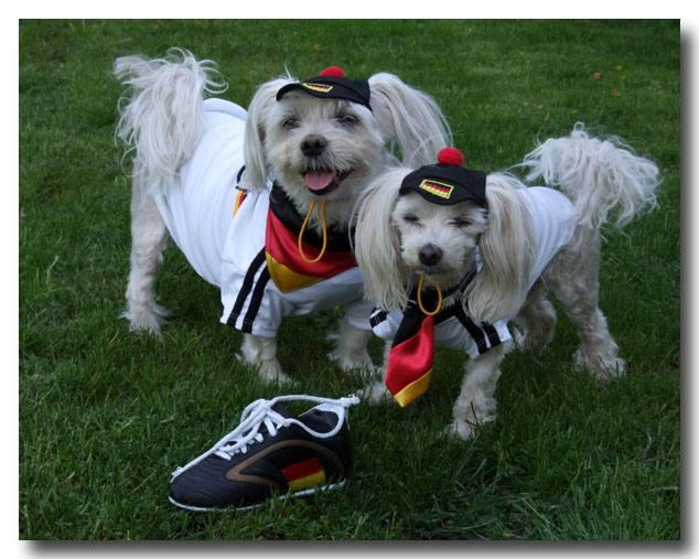 Krawatte für Hunde auf Halsband Deutschland