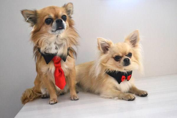 Hundekragen Hundekrawatte auf Halsband  BLACK CLASSIC