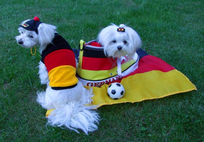 Schutzh�schen * DogsZone * EM 2016 * FUSSBALL