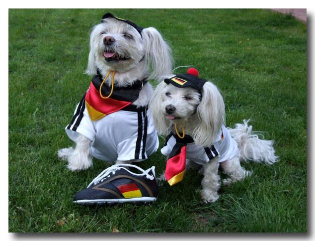 Hunde Fussball T-Shirt  Trikot   DEUTSCHLAND 2016 mit 4 Sternen