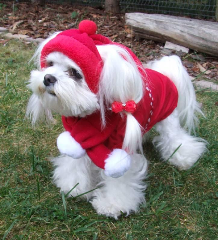 Hundejacke,Winterjacke mit Schal NESNA RED