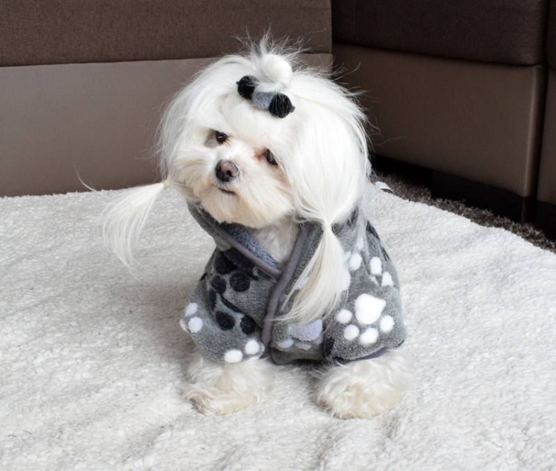 3b5bf477745550 Doppelseitiger Bademantel für Hunde GREY PAW