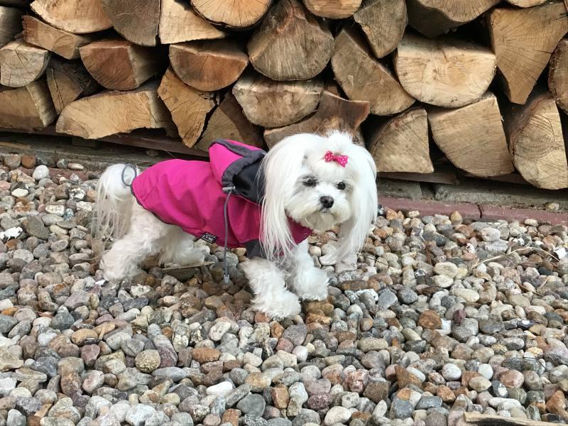 Hunde Herbst Winter Jacke Bora Limited Edition