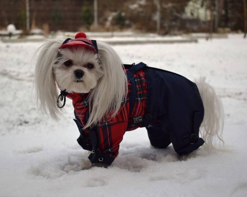 Winteranzug Ring D SkimantelwatsonMit Hunde Wintermantel BCQxhdtsr